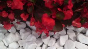 oblutak i cvece
